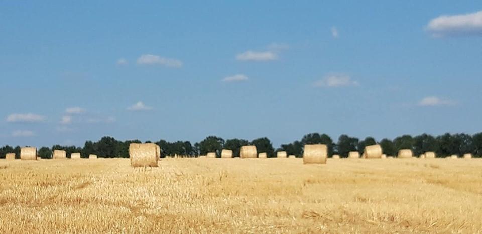 Небо і поле України